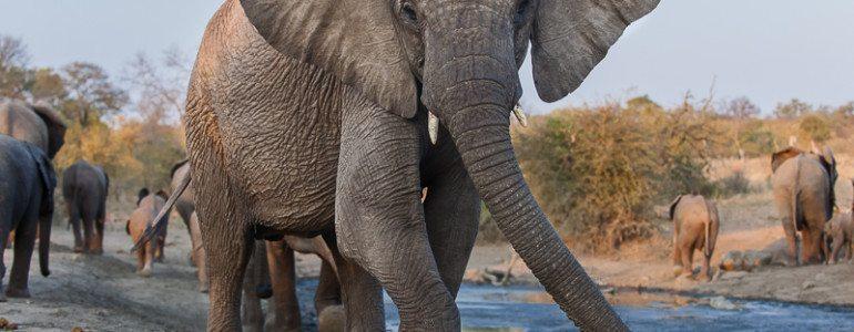 Elephant herd at Pondoro Game Lodge
