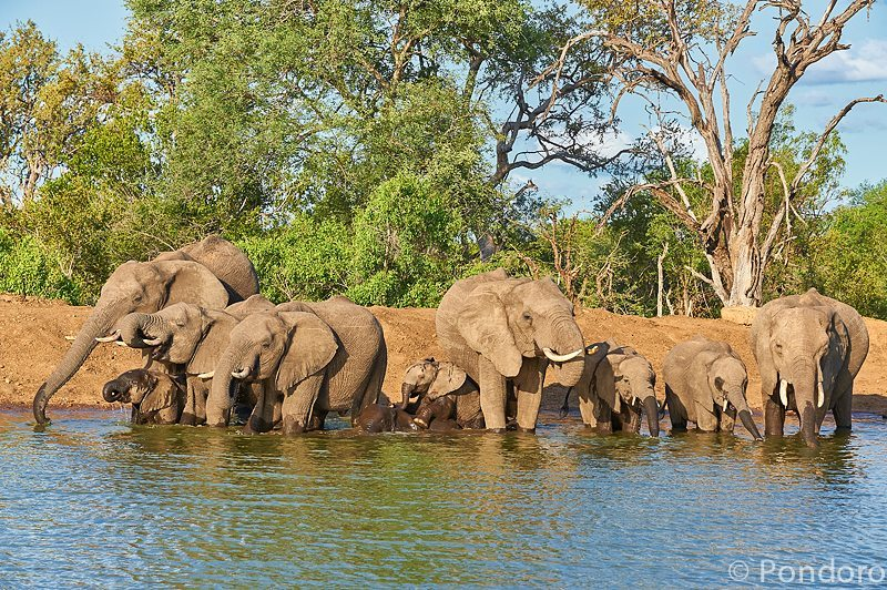 Elephants at Pondoro Safari Lodge