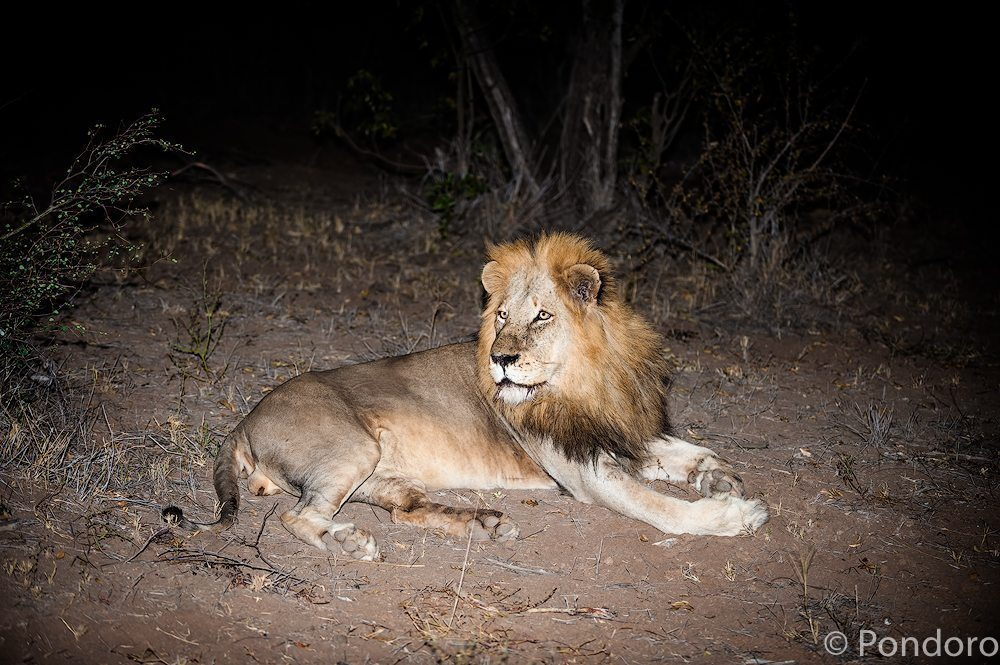 Big 5 safari sightings at Pondoro