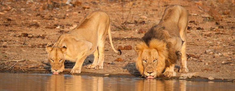 Safari sightings at Pondoro Safari lodge