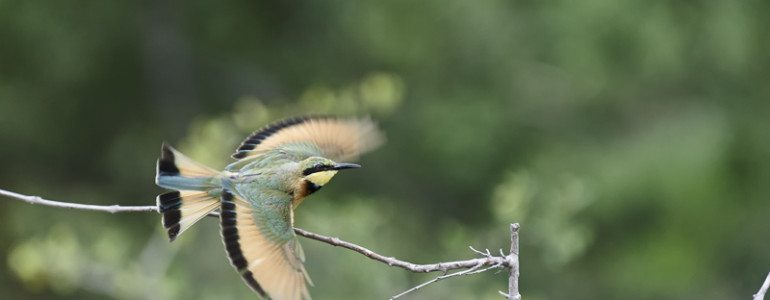 Bee-eater at Pondoro Safari Lodge