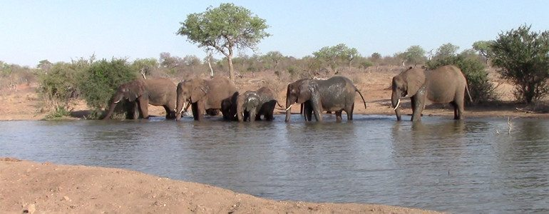 Elephants drinking at Pondoro Game Lodge