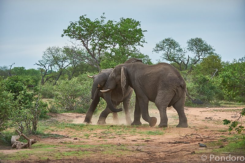 Elephants at Pondoro Game Lodge
