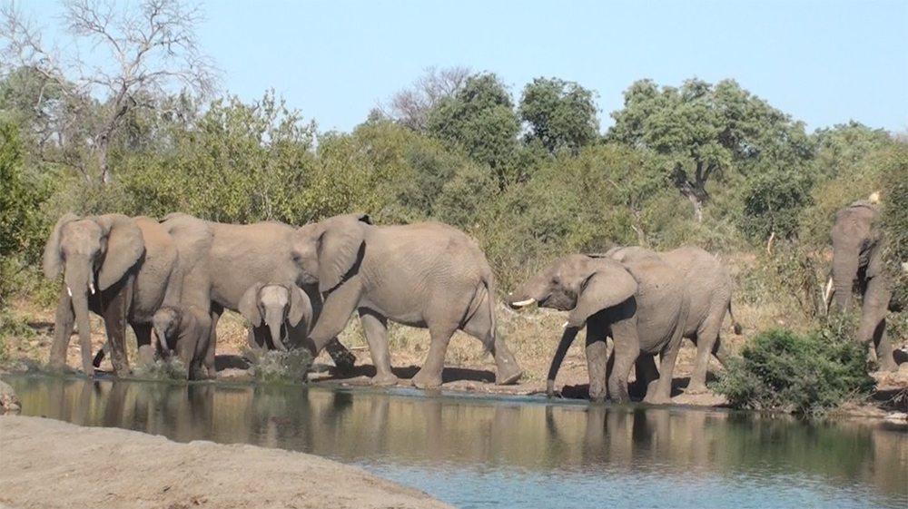 Elephants at water Pondoro Safari Lodge