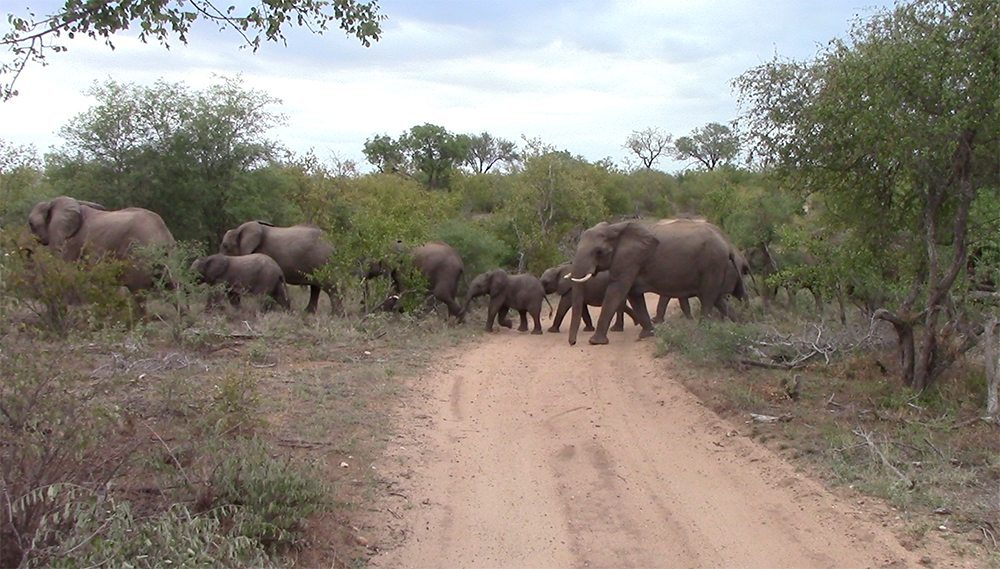 Elephant herd crossing at Pondoro Safari lodge