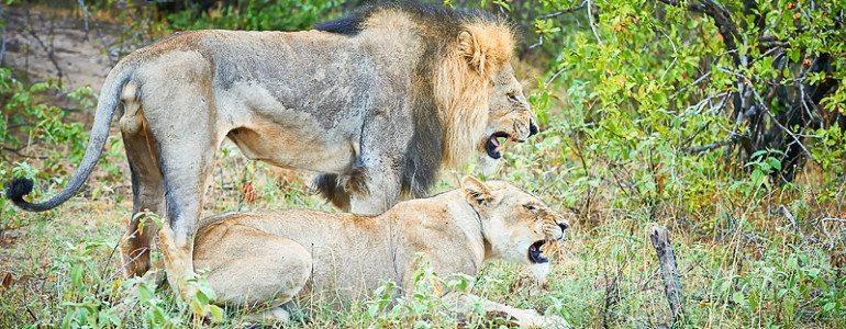 Safari sightings at Pondoro Game Lodge