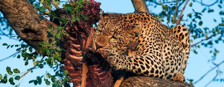 Weekly safari sightings at Pondoro