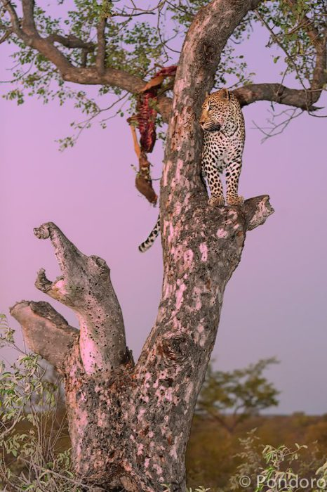 Weekly safari sightings at Pondoro Game Lodge