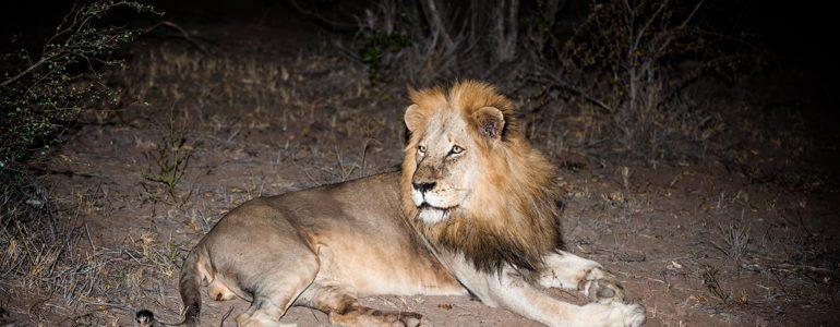 Big 5 safari sightings at Pondoro