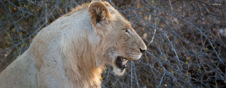 Safari sightings at Pondoro Game Lodge
