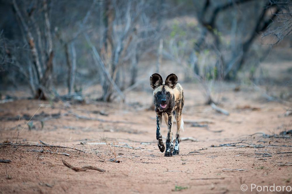 Safari sightings at Pondoro lodge