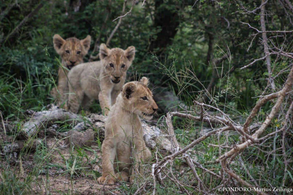 safari sightings